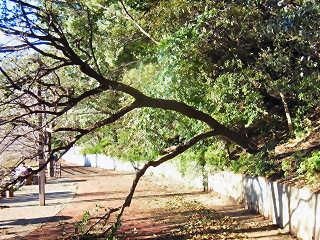 公園の倒木