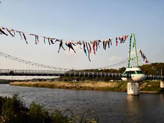 新川にはためく鯉のぼりたち