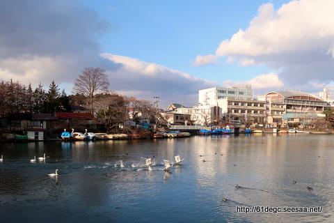 白鳥が舞う高松の池
