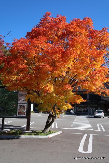 道の駅 尾瀬檜枝岐の紅葉