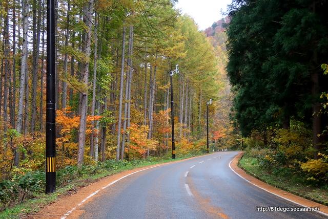 落葉するカラ松林