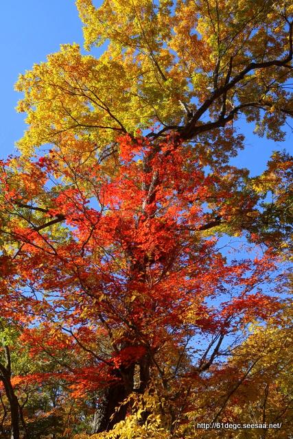 玉川渓谷の紅葉その2