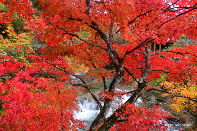 湯ノ浜温泉 瀧見橋の紅葉
